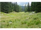 Slovenske planine v vseh letnih časihPaše zgleda , da je kar precej.