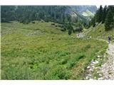 Slovenske planine v vseh letnih časihGovedo se je paslo na spodnjem pašniku-pod potjo, ki vodi k Krnskem jezeru.