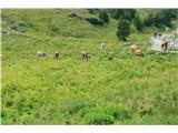 Slovenske planine v vseh letnih časihNi jih zgledalo veliko.