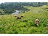 Slovenske planine v vseh letnih časihLahko se pasejo še kje drugje.