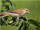 Hranjenje pticsamica