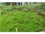 Komenob poti ne moreš prezreti živo zelene barve mahu