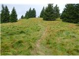Komenin te trave v šopih in lokih, ki te vabijo v svoje naročje --če ne bi bile mokre