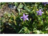 Katera rožca je to?Sviščevec je tipična zgodnje jesenska gorska roža-letos cvetijo še posebej zgodaj.