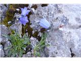 Katera rožca je to?Ko sem primerjal obe je v cvetu očitna razlika.Listi pa so se mi zdeli slični.