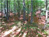 Mrzla goramimo struge v gozd in levo proti balvanu