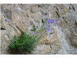 Katera rožca je to?Za rušnato zvončico bi lahko rekli, da je prava jesenska roža.Ob poti je rastla tudi koprivolistna.