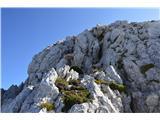 Bovški GamsovecPot na vrh s sedla spodaj do vrha nam ne bo vzela več kot urco.