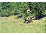Slovenske planine v vseh letnih časihPopolnoma nova lovska preža na planini.