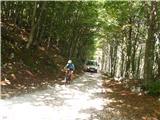 Kobariški Stolzgornji odsek ceste čez gozd - zmoti kakšen kombi, ki prevaža jadralne padalce
