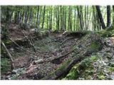 Slovenske planine v vseh letnih časihKolovoz je še viden,ampak se zasipa.