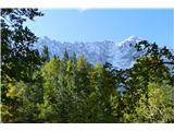 Belopeška jezera - Rifugio Zacchi iznad dreves pokuka Mangart