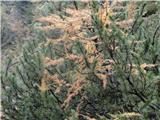 Trupejevo poldne - VošcaJesenske barve