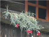 Trupejevo poldne - VošcaCvetje na Hlebanjevi hiši