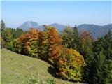 Velika planina2017.10.02.149 jesenski gozd