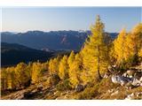 Debela peč, Brda, Lipanski vrh, MrežceMacesni rumenijo ...