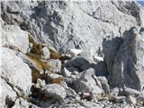 Hranjenje pticna grebenu Grintovca