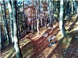 Mali OzebnikPot skozi gozd
