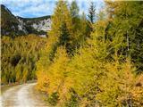 Čudovita naravalepa pot..