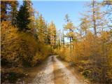 Čudovita naravav zlatu objeta cesta..