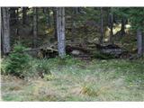 Slovenske planine v vseh letnih časihTakoj na začetku planine na levi je nekoč stal lesen stan, ki pa se je sesul.