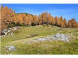 Slovenske planine v vseh letnih časihMecesni pa kar žarijo.Še teden dni in bodo goli.