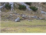 Slovenske planine v vseh letnih časihTu je opazno celo nekaj lesa.