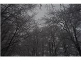 Mali in Veliki Snežnikpot pelje skozi gozd