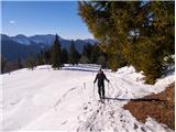 Monte Paularo in Monte DimonPrvi del vzpona se vije mimo smrek
