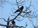 Polhograjska Grmada in Toščživljenje na drevesu