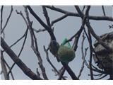 Hranjenje ptic