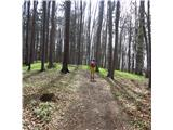 Po poteh Vinske goreČudoviti gozd