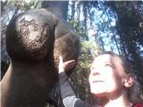 Tirske pečiskozi erotični gozd  ;)