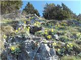 Tirske pečiGamsji vrt