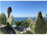 Slovenska obalapogled na morje preko kaktusov