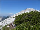 Zelenjak-PalecPalec vrh