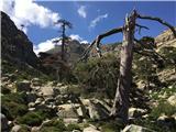 Paglia Orba - KorzikaOb poti ogromni borovci