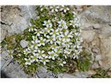 Katera rožca je to?Teaga belega drobiška kot so popkorese, peščenke ,lepnice in še katera ne ločim najboljše.