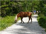 Robanov kot - Robanova planinatudi konji se sprehajajo prosto