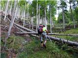 Matkova kopazačetek ovirajo in motijo podrta drevesa