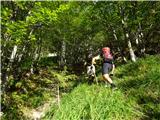 Matkova kopako v gozdu ujamemo pravo lovsko stezo je lažje