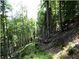 Matkova kopanadaljevanje - po opuščeni gozdni cesti navzdol