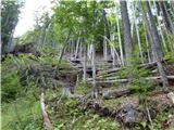 Matkova kopaveliko škode so v gozdu v preteklih letih naredile hude vremenske ujme