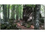 Mangartv gozdu so nam v pomoč možici in stare markacije