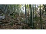 Velika planinaVišje prečimo v desno na gozdno ramo.