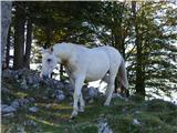 Menina planinasrečanje s konji, ki so šli na pašo, kar sami