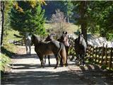 Menina planinana poti domov srečamo konje, ki se vračajo s paše