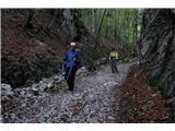 Na Triglav od domaSpuščali smo se po markirani poti v smeri Potoka in še naprej proti Zalem logu