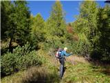 Prečenje Trentski Pelc - Srebrnjaknasproti koče čez redek gozd navzgor na komaj vidno stezico