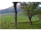 Kojca (1303m)Na izhodišče poti prek travnika.
